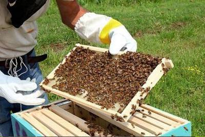 Hives & Nuc Boxes